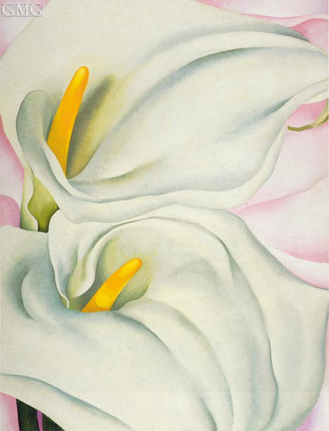 Two Calla Lilies on Pink